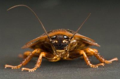 radical-roach